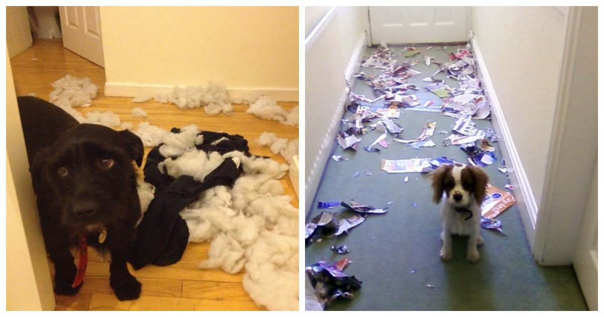 caught1.jpg?resize=1200,630 - 15 Guilty Dogs Who Were Caught in the Act by Their Humans and It's Hilarious