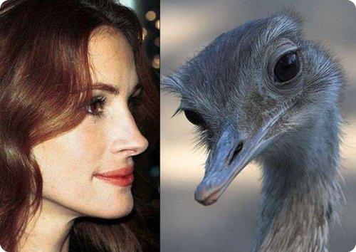 celebrite animal 004.jpg?resize=412,232 - 20 des personnalités qui ressemblent à des animaux et vice et versa