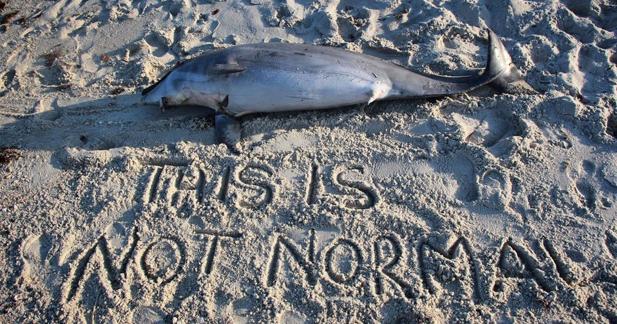 """dead dolphins.jpg?resize=412,232 - Woman Shares Heartbreaking Picture Of Dead Dolphin On The Beach And Asks, """"When Is This Going To Stop?"""""""