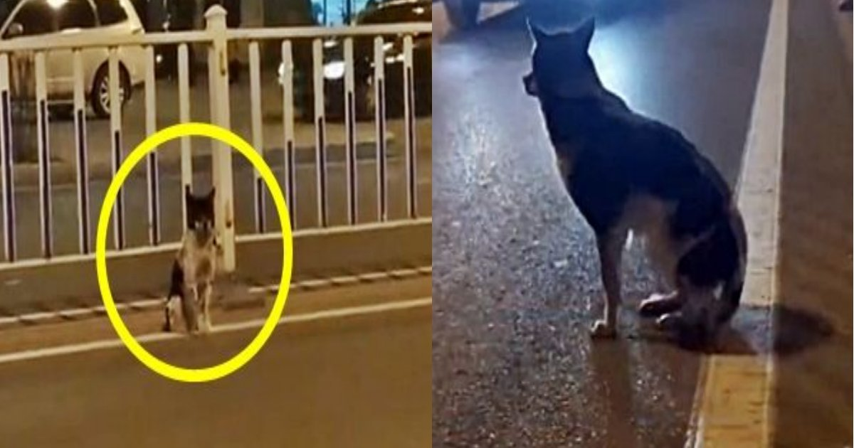 dog 1.png?resize=300,169 - 道路の真ん中で仔犬が80日間座り続けている理由とは?かなり泣けます
