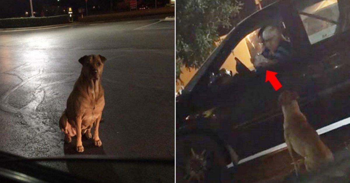dogmc.png?resize=412,232 - マクドナルドの前で野良犬のふりをしてハンバーガーを欲しがる飼い犬