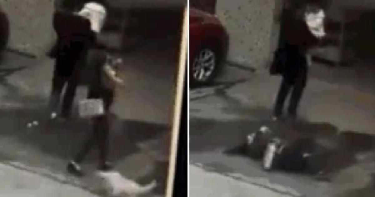 eca09cebaaa9 ec9786ec9d8c 7.png?resize=412,232 - 하늘에서 떨어진 강아지와 부딪쳐 중태에 빠진 여성(영상)