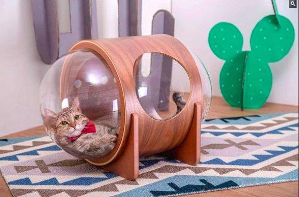 img 5c06bd695c816.png?resize=412,232 - Une société chinoise a créé des capsules spatiales pour vos chats