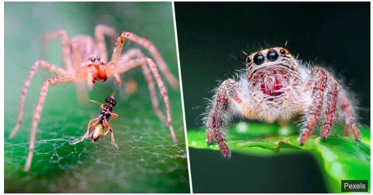 img 5c1a6355d72c9.png?resize=1200,630 - Si les araignées travaillaient ensemble, elles pourraient tous nous manger en un an.
