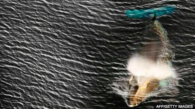 img 5c2542c36cb57.png?resize=412,232 - Japon : Reprise de la chasse commerciale à la baleine en juillet