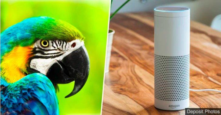 img 5c27d4b225643.png?resize=412,232 - Un perroquet devient meilleur ami avec un appareil Alexa