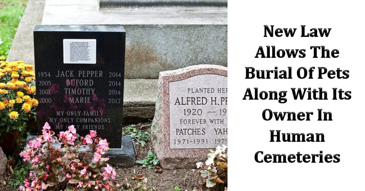 llll.jpg?resize=412,232 - New York Formulates A New Law Allowing The Burial Of Pets Along With Its Owner In Human Cemeteries