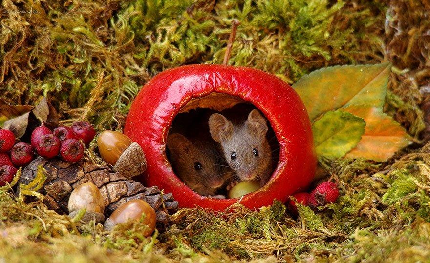 miniature mice family house simon dell 50.jpg?resize=412,232 - Ce photographe a découvert une famille de souris dans son jardin. Il leur construit un incroyable village.