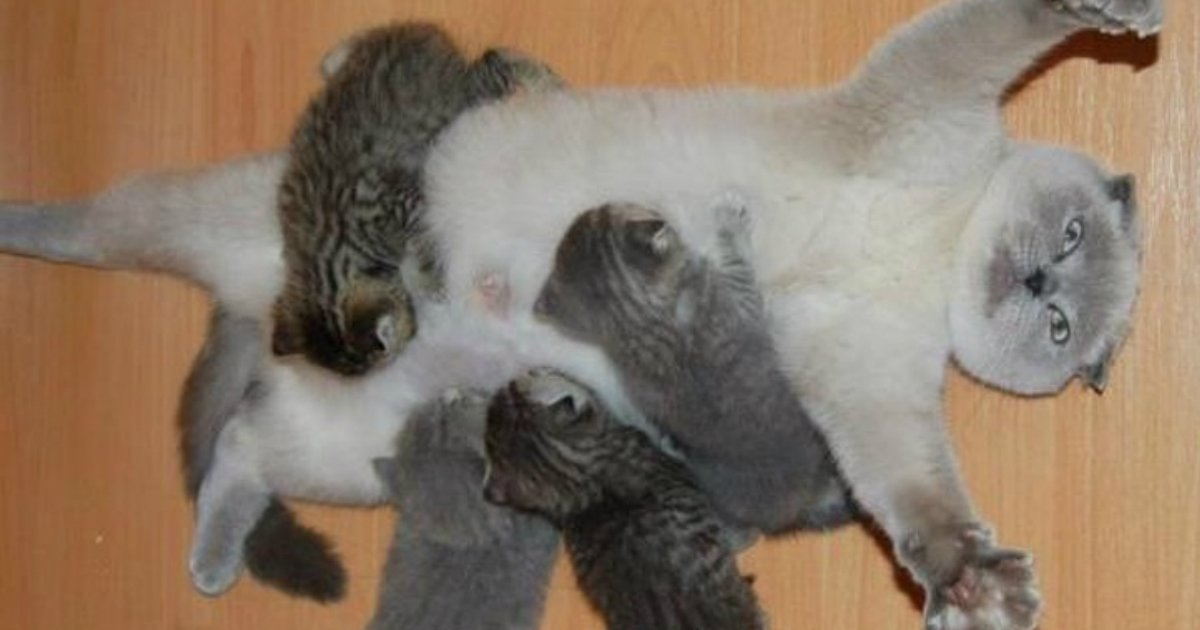 mother love.jpg?resize=412,232 - 12+ Adorable Photos Showing The Best Of Animal Motherly Love