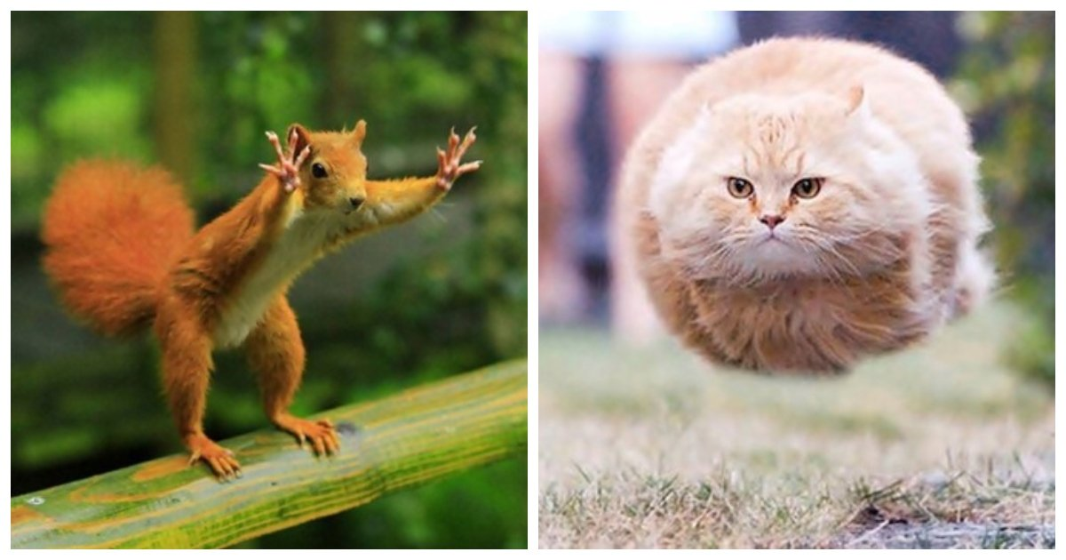 perfect.jpg?resize=1200,630 - 25 Perfectly Timed And Hilarious Animal Pictures