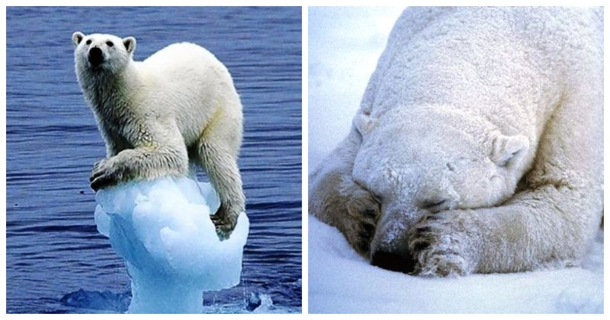 polar.jpg?resize=1200,630 - 25 Fascinating Little Known Facts About Polar Bears