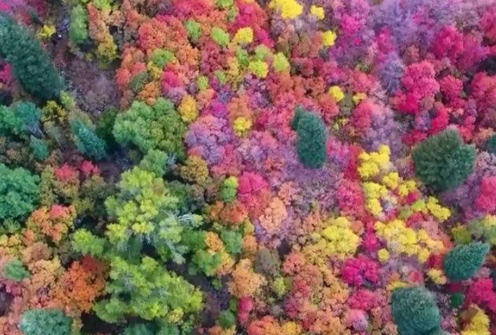 screen shot 2018 12 13 at 5 59 37 pm.png?resize=1200,630 - 「原來大自然是這種色~」網友用空拍機拍下「超不真實」的森林美景