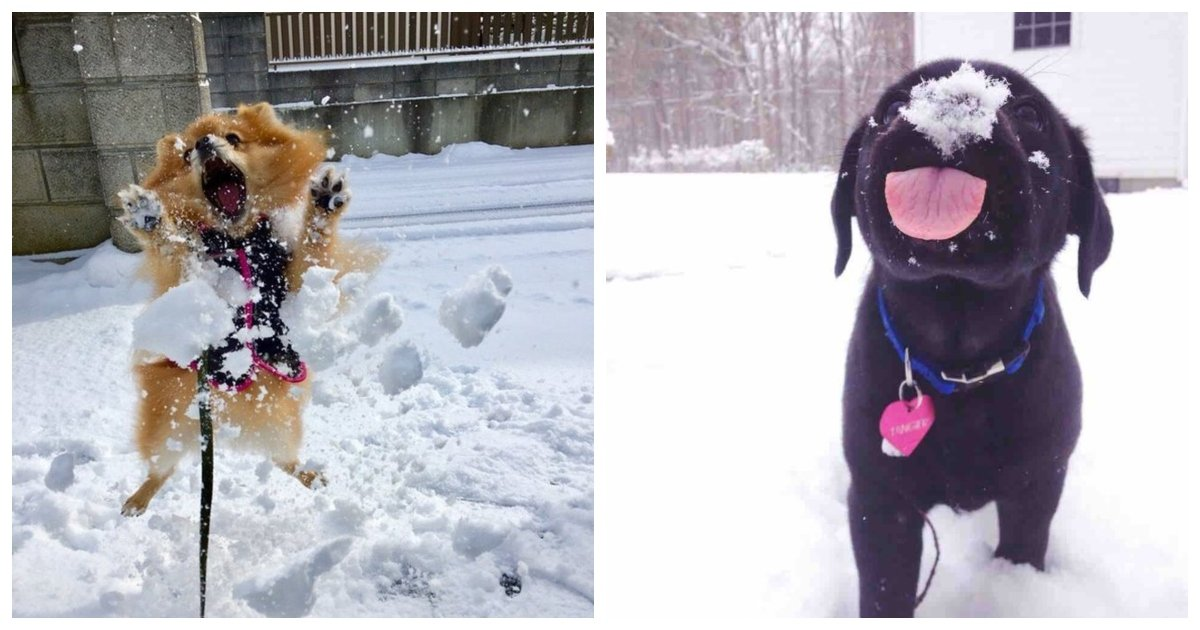 snow 1.jpg?resize=1200,630 - 20 Dogs Who Love Snow So Flipping Much