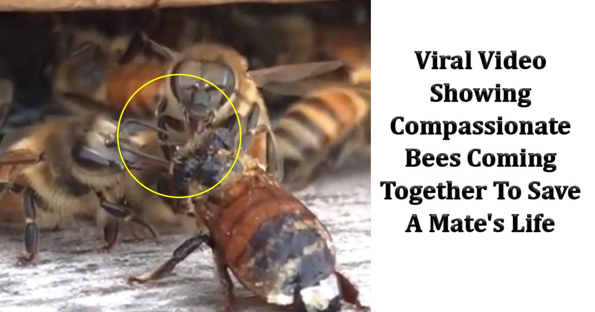 ssss.jpg?resize=412,232 - Viral Video Showing Compassionate Bees Coming Together To Save A Mate's Life Has Taken The Internet By Storm