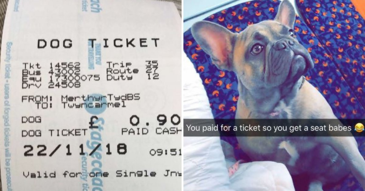 ticket4.png?resize=412,232 - Woman Shocked When Bus Driver Tells Her She Needs To Buy Ticket For Her Dog As Well