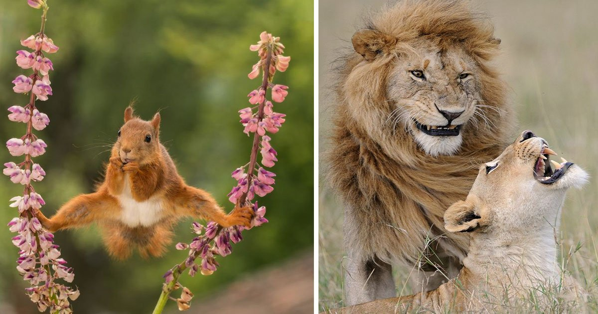 untitled 1 17.jpg?resize=412,232 - Funniest Wildlife Photos Of 2018 Have Been Announced And They Are Too Amazing