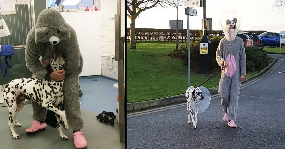 untitled 1 35.jpg?resize=300,169 - Vet Dresses Up As Mouse To Help Anxious Dog Who Needed An Operation