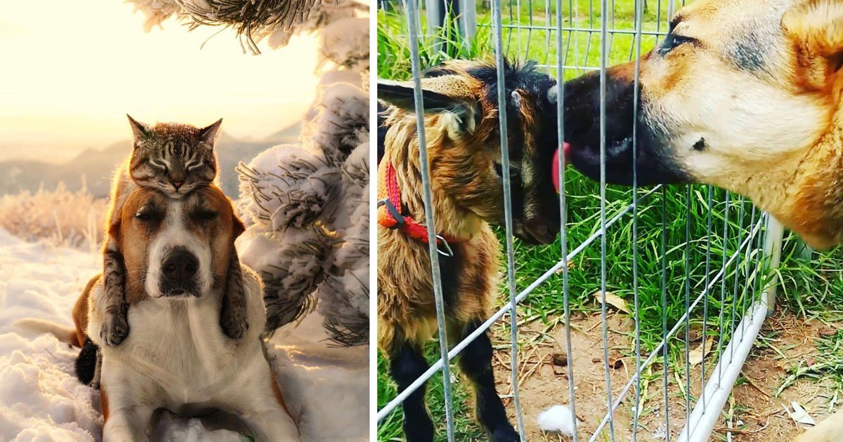 untitled 1.jpg?resize=1200,630 - 'Love Is Blind' These Pictures Of Animal's Friendship Proves It Right