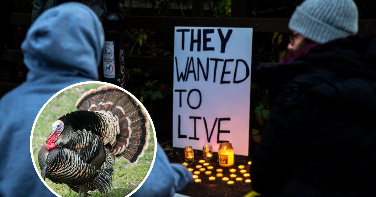 untitled design 68.png?resize=412,232 - Vegans Rally In Front Of Charity Farm And Hold Wake For Turkeys Killed For Christmas Dinners