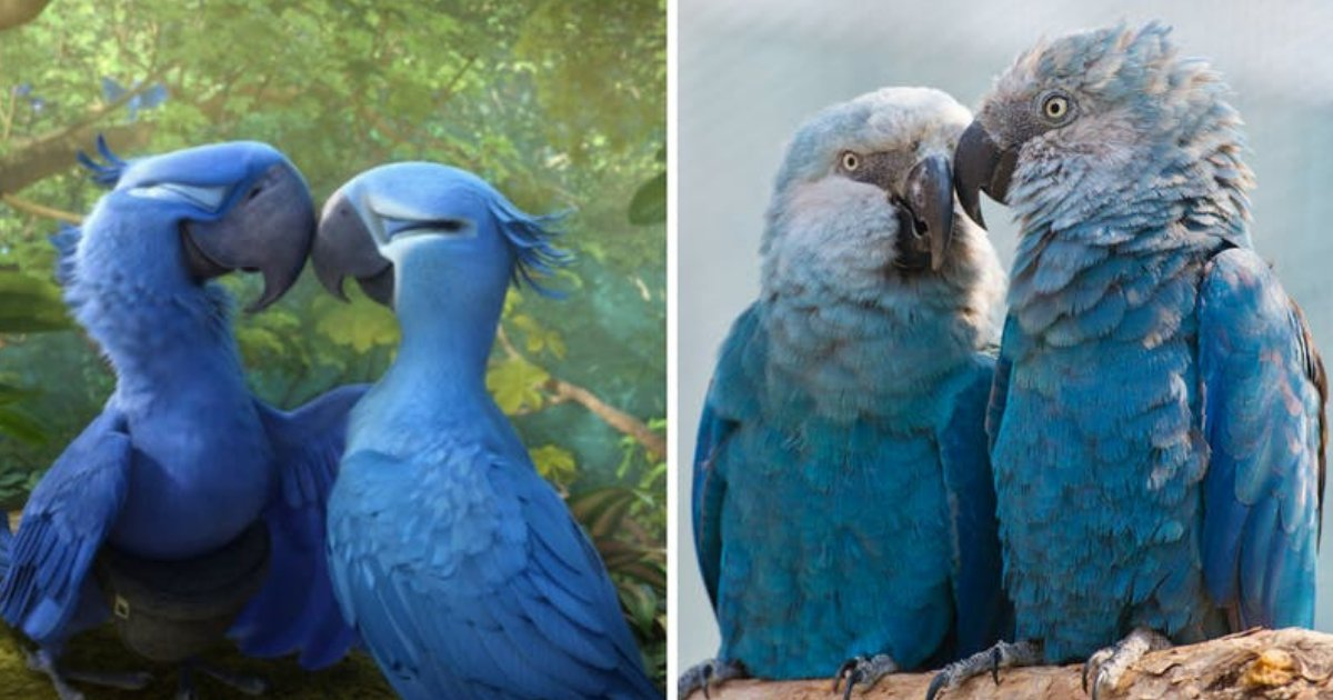 untitled design 98.png?resize=1200,630 - The Blue Macaw Parrot Which Appeared In Movie 'Rio' Is Now Extinct