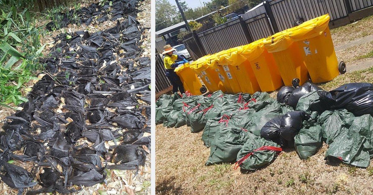 y2 1.png?resize=412,232 - 앞마당에 죽어있는 '5500마리'의 박쥐 시체를 보고 기겁한 여성 (영상)