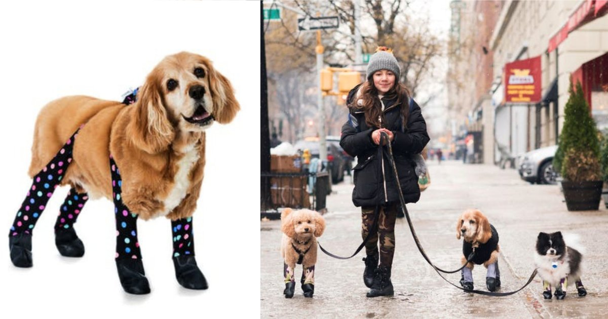 y3 10.png?resize=412,232 - These Winter Leggings Are Going to be Your Dog's Best Friend This Season