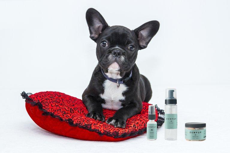 zenpup.png?resize=412,232 - Cette compagnie utilise du cannabis pour améliorer la vie de votre chien