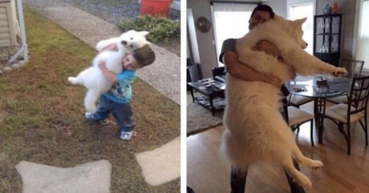 13 11.jpg?resize=412,232 - 30+ Touching Photos of Grown-Up Puppies That Prove Time Runs Way Too Fast