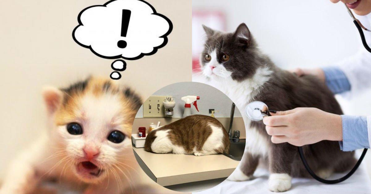 4 13.jpg?resize=412,232 - 【爆笑】自分が動物病院にいることに気づいた猫の行動が面白すぎる!!