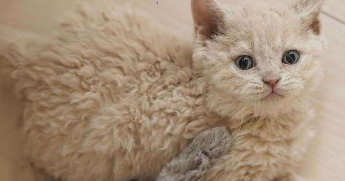 4 16.jpg?resize=636,358 - 15+ Rare House Cat And Dog Breeds We Didn't Know Existed