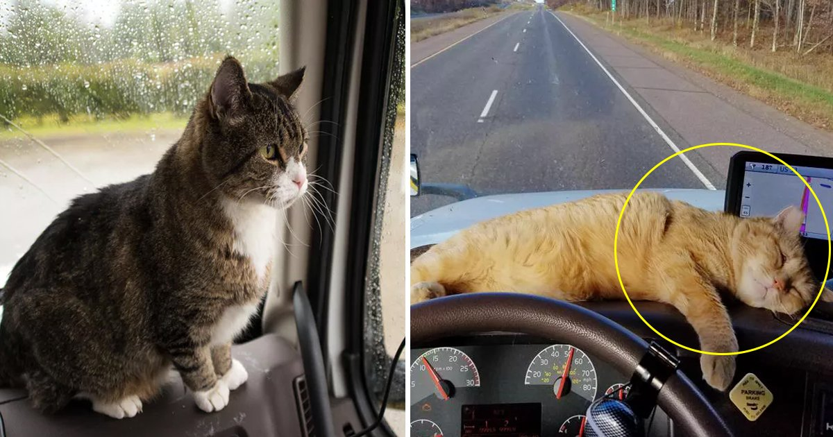 adfa.jpg?resize=412,232 - Lonely Truck Driver Adopted Stray Cat And Now She Is His Best Traveling Companion