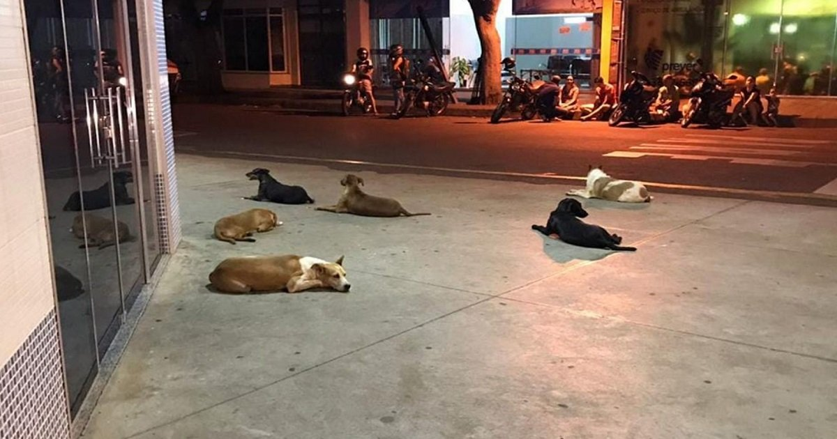 d3 5.jpg?resize=1200,630 - Homeless Man Suffers A Stroke But What His Six Loyal Dogs Did Next Has Touched Hearts
