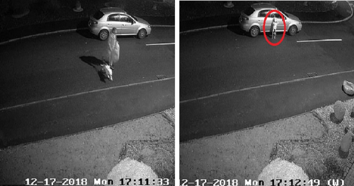 d4 1.jpg?resize=412,232 - CCTV Catches Man Dumping Dog On Roadside & Driving Away As The Pooch Tries To Jump Back In