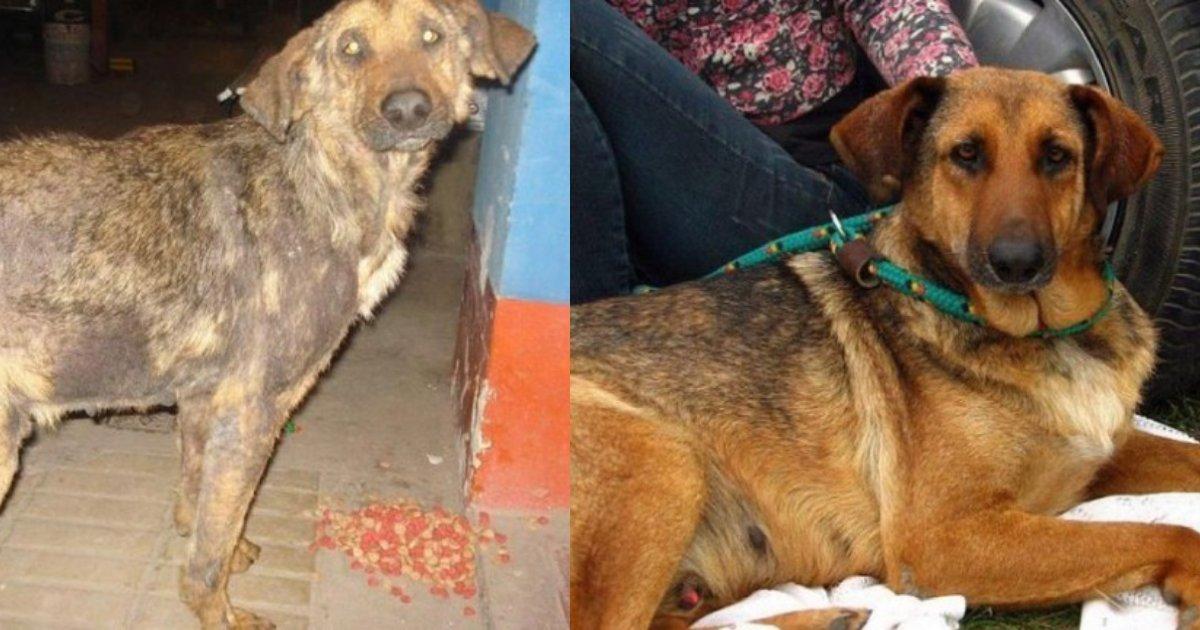 """efbc94 1.png?resize=1200,630 - 保護された捨て犬たちの瞳に""""輝き""""が戻る瞬間…捨て犬ビフォア・アフター"""