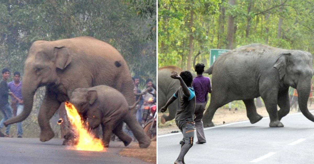 elephants6.png?resize=412,232 - Residents Attack Elephants With Stones and Firebombs For Wandering Into the Streets