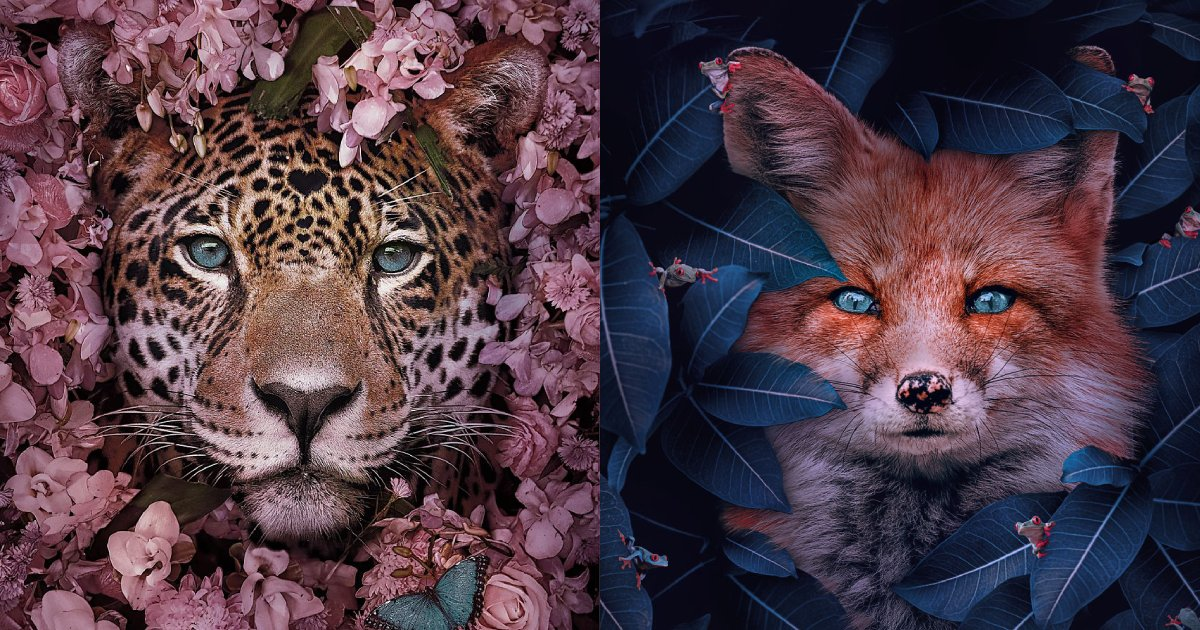 endagered species.png?resize=412,232 - 14 Amazing Animal Portraits By Andreas Häggkvist To Raise Awareness For Endangered Animal Species