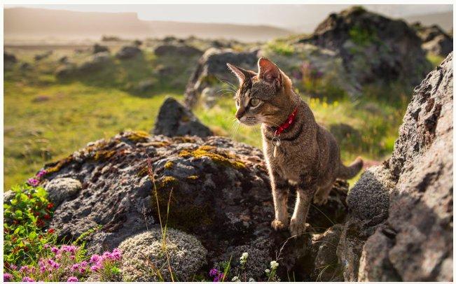 img 5c4634b008ba5.png?resize=412,232 - Un chat de ménage en Islande devient célèbre dans le monde entier