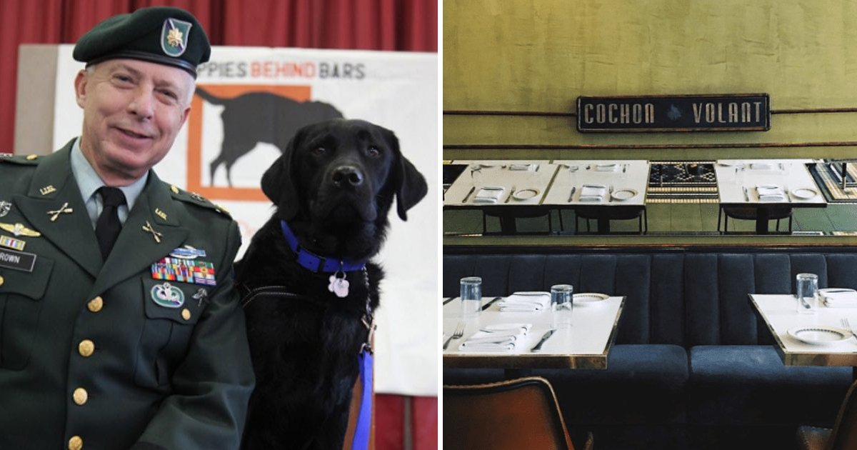 jgjgj.jpg?resize=412,232 - Army Veteran Was Kicked Out Of The Restaurant For Bringing Service Dog With Him And People Are Furious What They Did