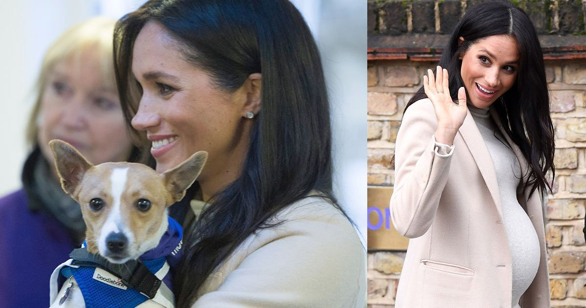 meghan markle visits animal welfare charity and falls in love with rescue dogs.jpg?resize=412,232 - Meghan Markle Visits Animal Welfare Charity And Falls In Love With Rescue Dogs