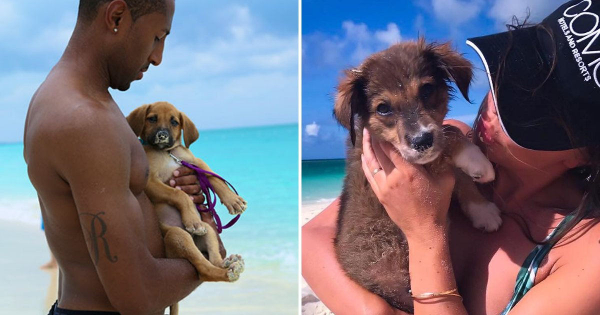 puppies.png?resize=1200,630 - Tropical Island Full of Cute Rescue Puppies, Tourists Can Play With or Adopt the Pups