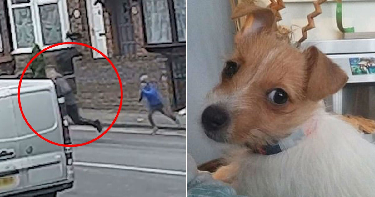 puppy stolen video.jpg?resize=412,232 - Heartbreaking Video Of A Young Boy Chasing A Thief Who Stole His Beloved Puppy