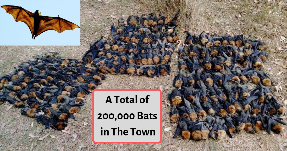 s3 11.png?resize=412,232 - Australia Witnessed Such An Incident For the First Time As Thousands of Bats Fell To the Ground and Died of Heat Strokes