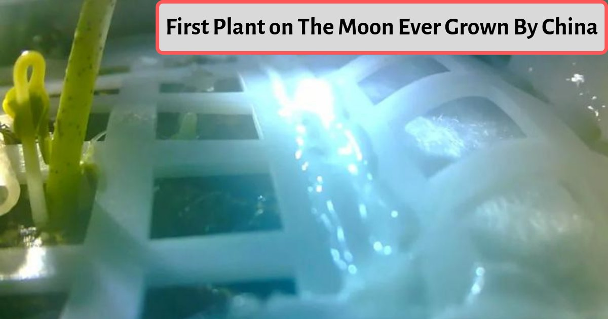 s4 9.png?resize=412,232 - China May Have Grown the First Plant On the Surface of the Moon