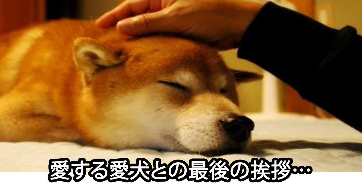 saigono.jpg?resize=1200,630 - 写真作家も涙した…愛犬と家族の「最後の挨拶」