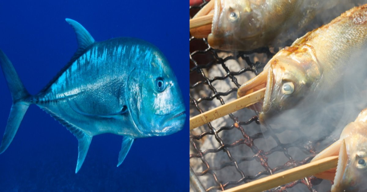 sakana.png?resize=1200,630 - 魚のニオイを嗅いだだけで命を落とした少年、魚のニオイに敏感だとヤバイ?