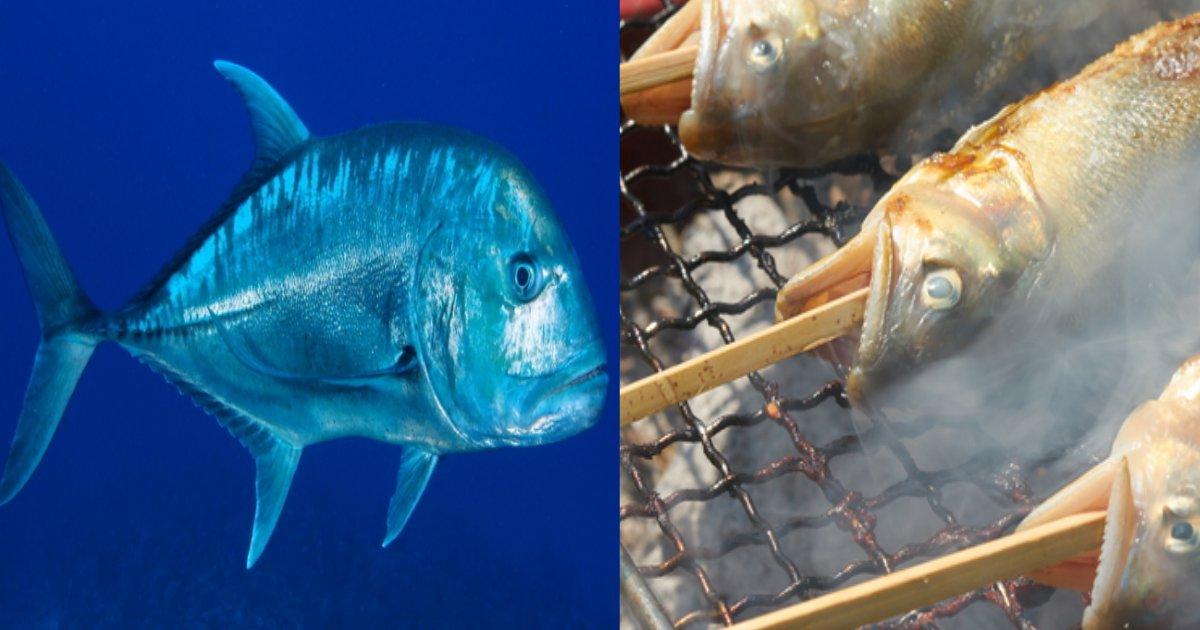 sakana.png?resize=300,169 - 魚のニオイを嗅いだだけで命を落とした少年、魚のニオイに敏感だとヤバイ?