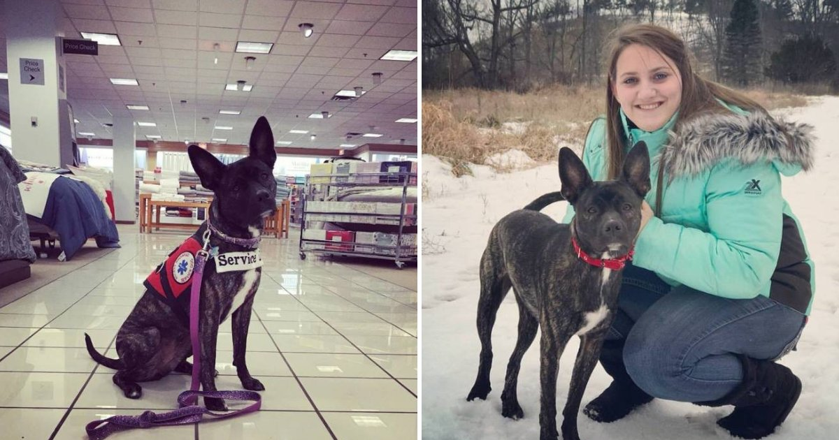 servicedog4.png?resize=412,232 - Woman Shares Strong Message After Kids Smack Her Service Dog In Store