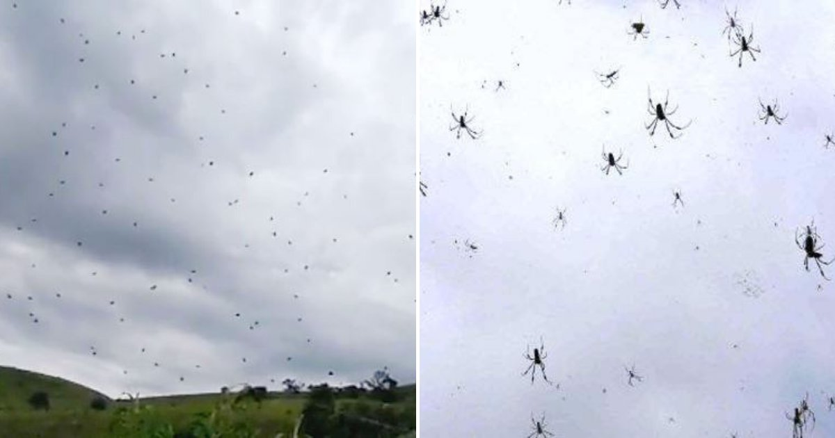 spiders5.png?resize=1200,630 - Thousands of Spiders Fall From the Sky Forcing Frightened Residents To Run For Cover