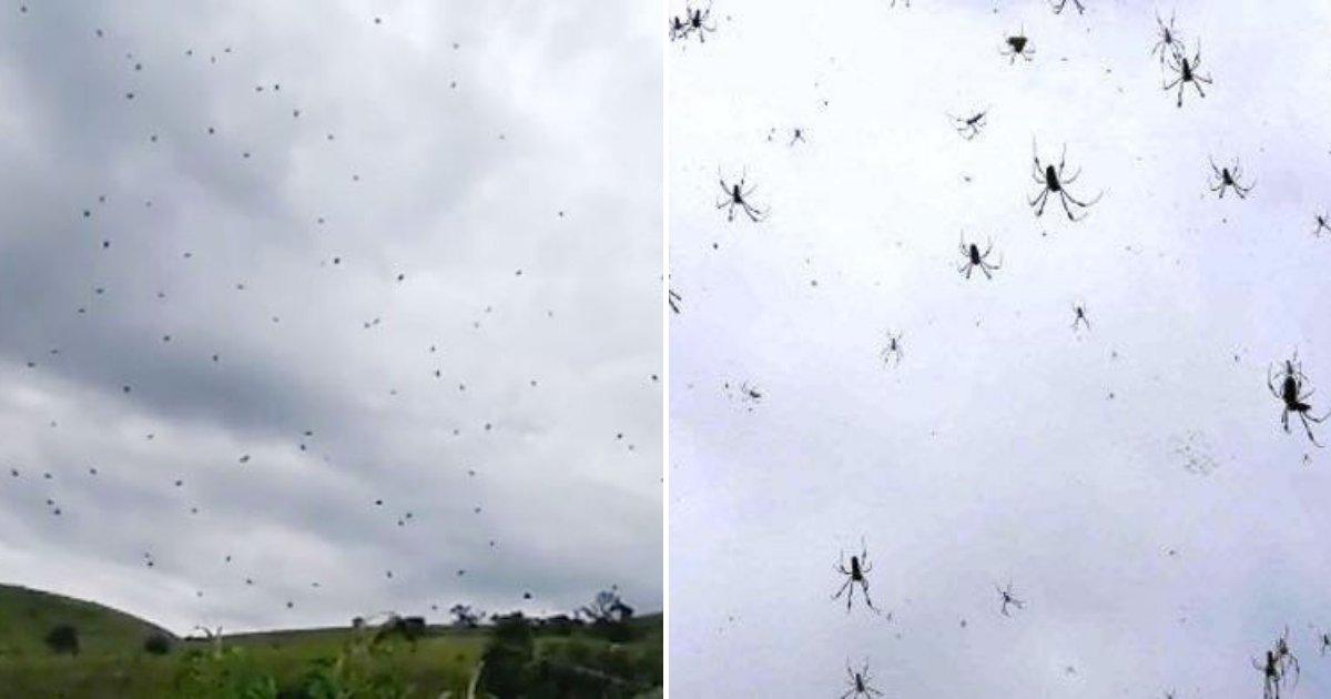 spiders5.png?resize=412,232 - Des milliers d'araignées tombent du ciel, forçant les habitants effrayés à se mettre à l'abri