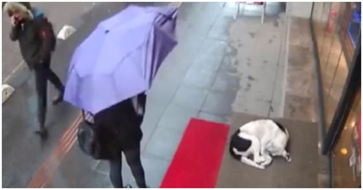 stray.jpg?resize=1200,630 - CCTV Captures A Woman's Act Of Kindness To A Shivering Stray Dog & It Goes Viral